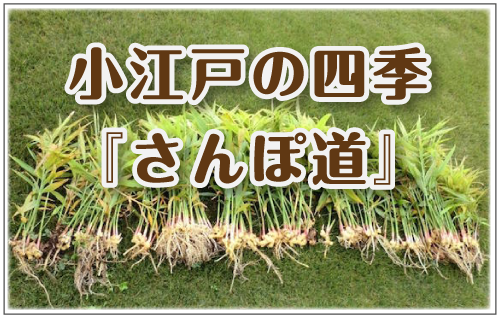 小江戸の四季_さんぽ道